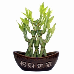 ad_Indoor_Zen_Bamboo_Set_05_01.jpg