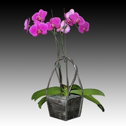 ad_Orchid_03_01_P10.jpg
