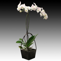 ad_Orchid_05_01.jpg