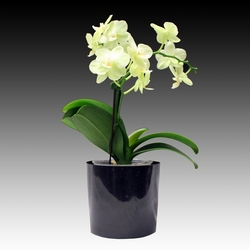 ad_Orchid_08_01.jpg