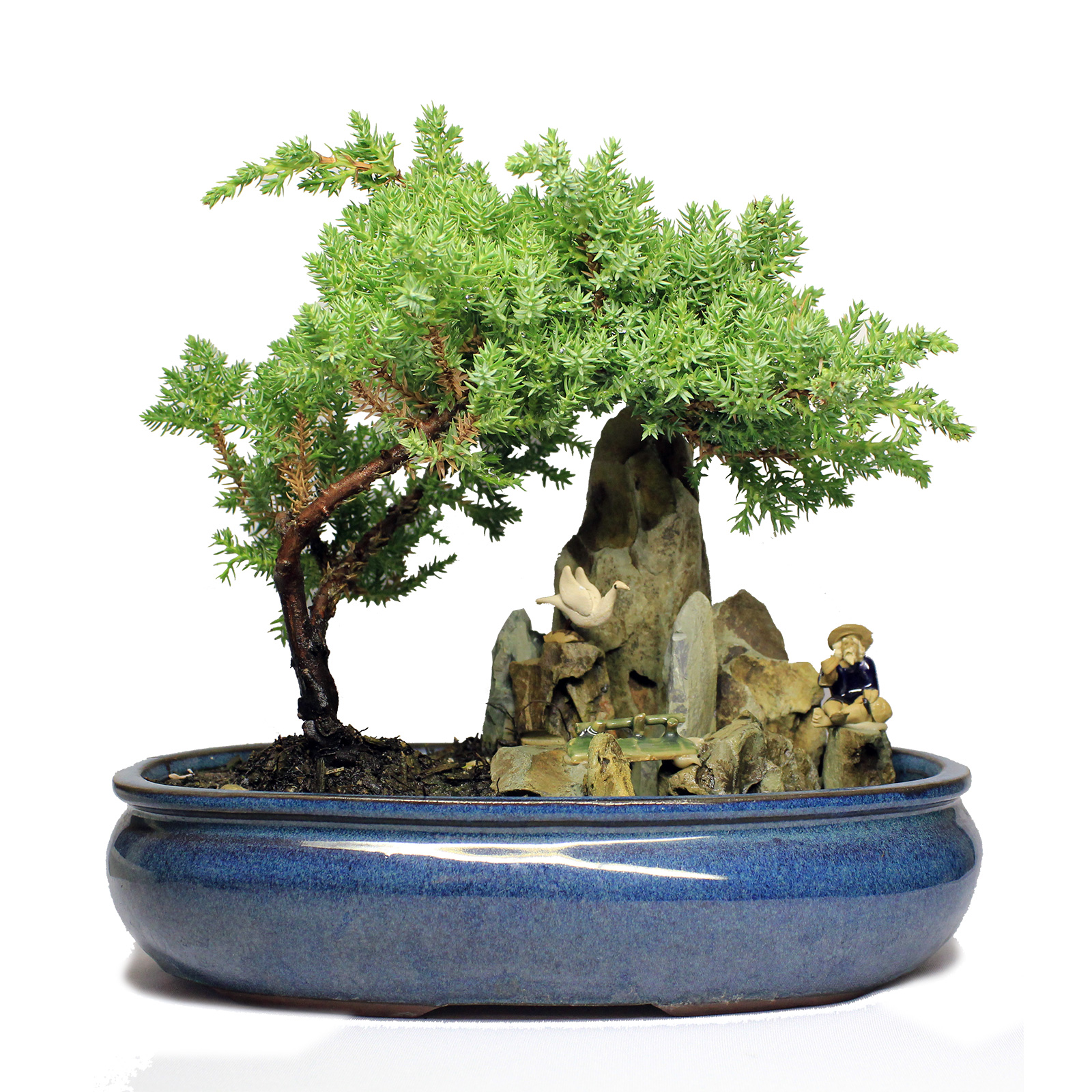 Indoor Zen Large Koi Pond Figurine Juniper Bonsai Tree
